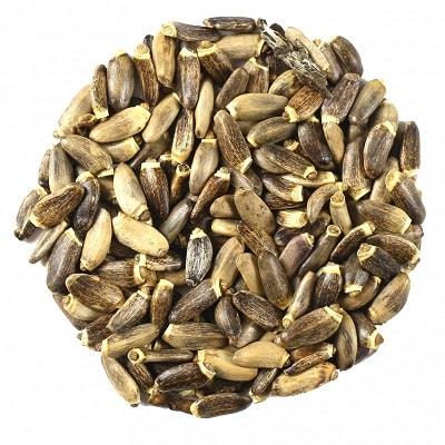 Margainių sėklos iš kurių spaudžiamas aliejus